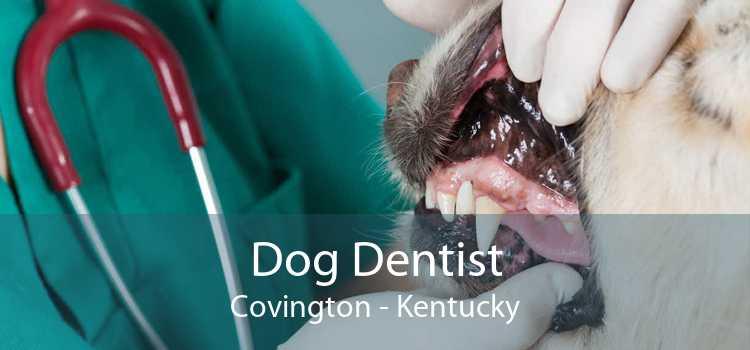 Dog Dentist Covington - Kentucky