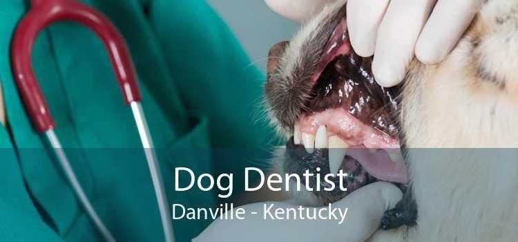 Dog Dentist Danville - Kentucky