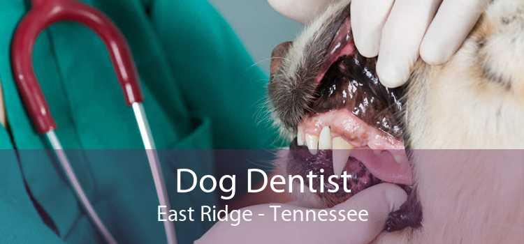 Dog Dentist East Ridge - Tennessee