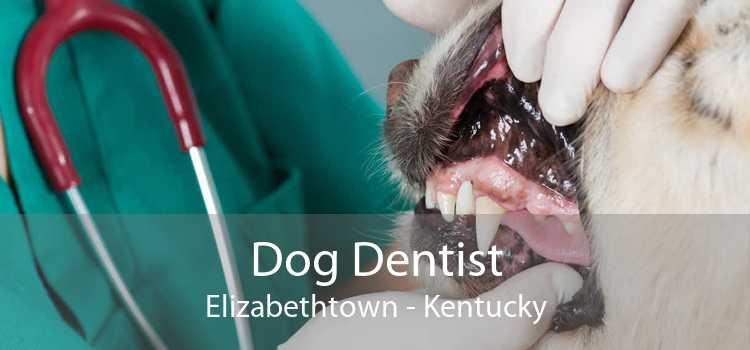 Dog Dentist Elizabethtown - Kentucky