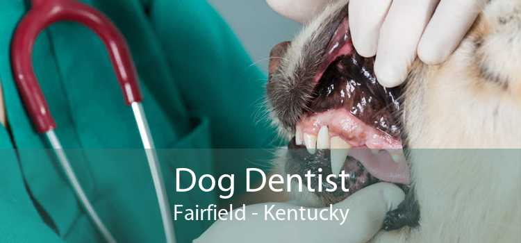 Dog Dentist Fairfield - Kentucky