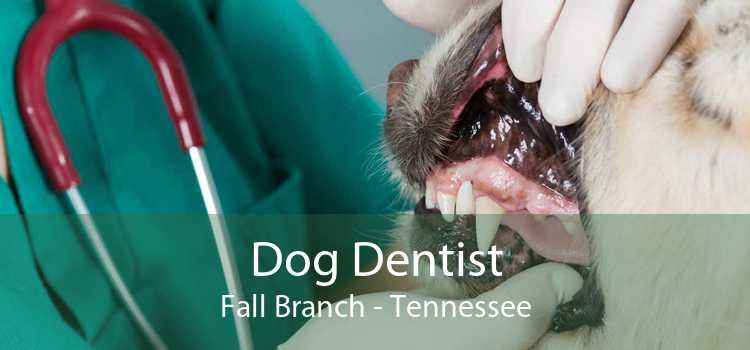 Dog Dentist Fall Branch - Tennessee