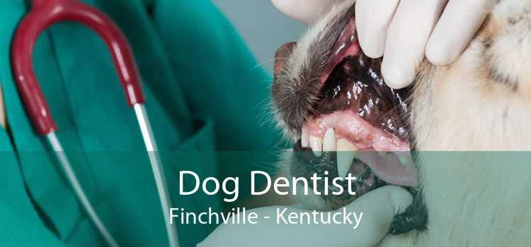 Dog Dentist Finchville - Kentucky