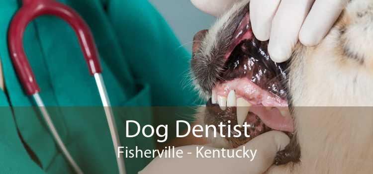 Dog Dentist Fisherville - Kentucky