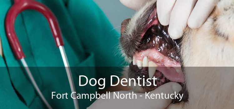 Dog Dentist Fort Campbell North - Kentucky