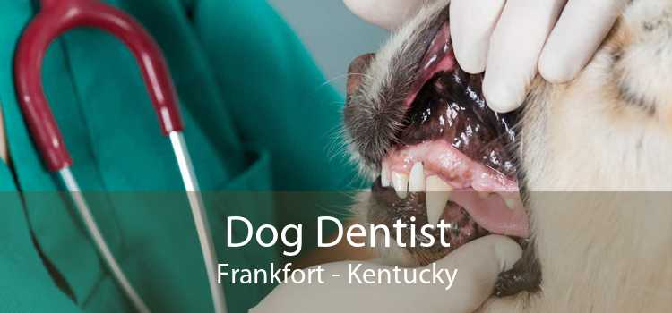 Dog Dentist Frankfort - Kentucky