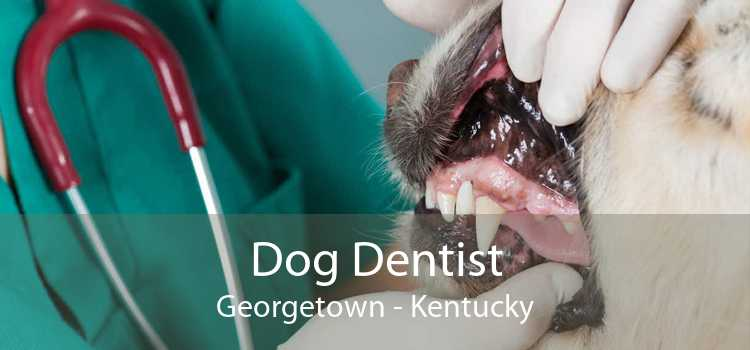 Dog Dentist Georgetown - Kentucky