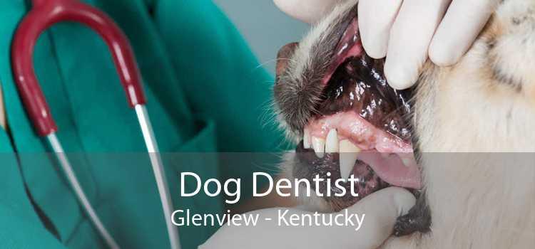Dog Dentist Glenview - Kentucky