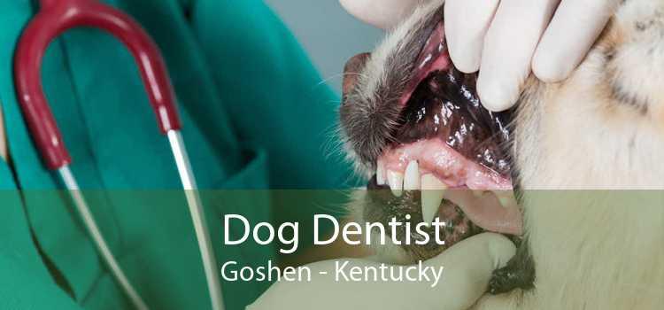 Dog Dentist Goshen - Kentucky