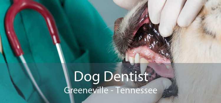 Dog Dentist Greeneville - Tennessee