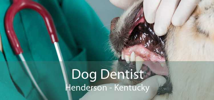 Dog Dentist Henderson - Kentucky