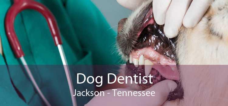 Dog Dentist Jackson - Tennessee