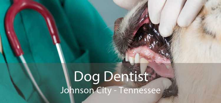 Dog Dentist Johnson City - Tennessee