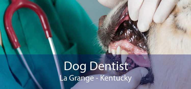 Dog Dentist La Grange - Kentucky
