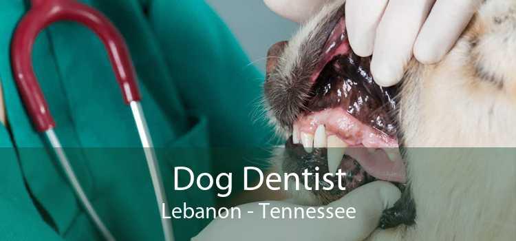 Dog Dentist Lebanon - Tennessee