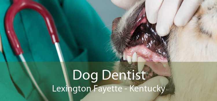 Dog Dentist Lexington Fayette - Kentucky