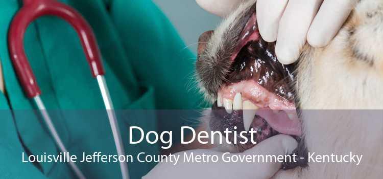 Dog Dentist Louisville Jefferson County Metro Government - Kentucky