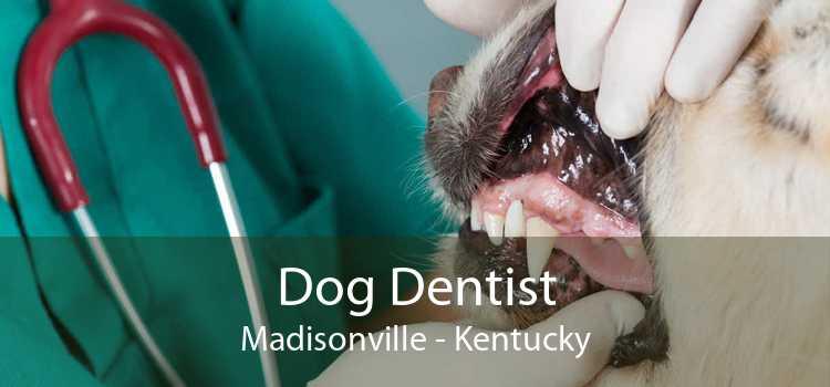 Dog Dentist Madisonville - Kentucky