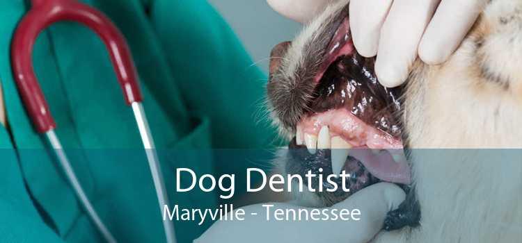Dog Dentist Maryville - Tennessee