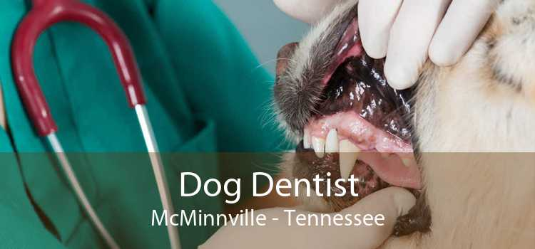 Dog Dentist McMinnville - Tennessee