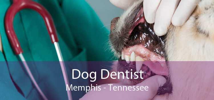 Dog Dentist Memphis - Tennessee