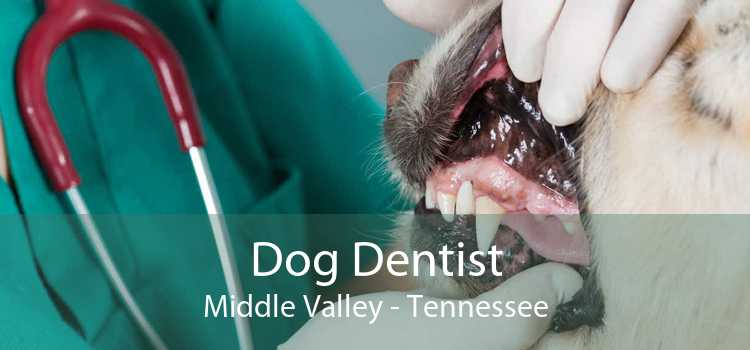 Dog Dentist Middle Valley - Tennessee