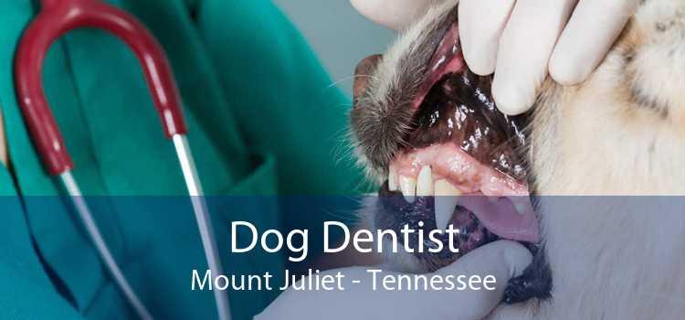 Dog Dentist Mount Juliet - Tennessee