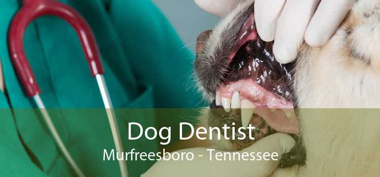 Dog Dentist Murfreesboro - Tennessee