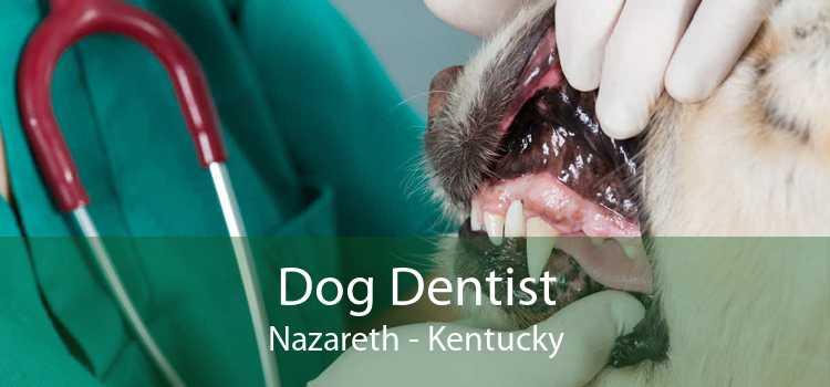 Dog Dentist Nazareth - Kentucky