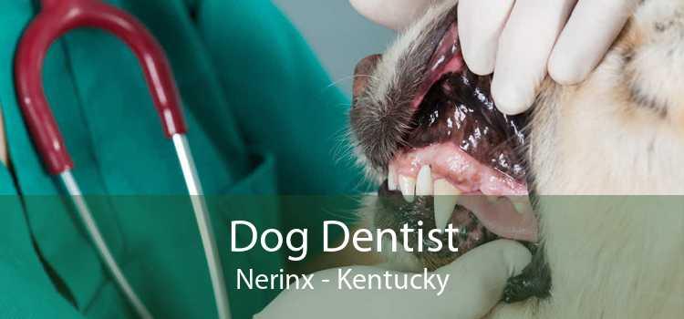 Dog Dentist Nerinx - Kentucky