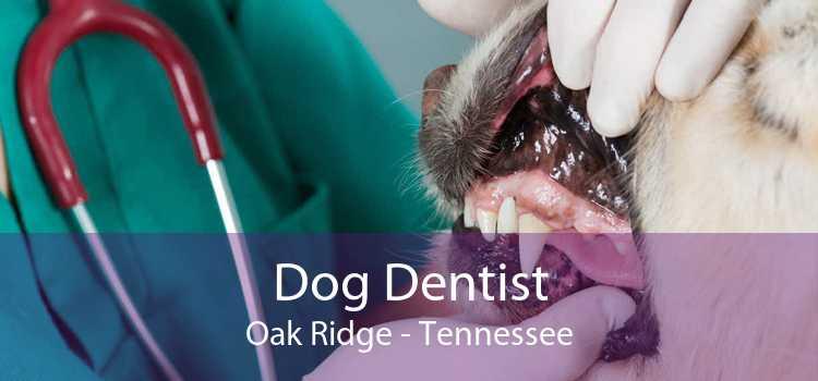 Dog Dentist Oak Ridge - Tennessee