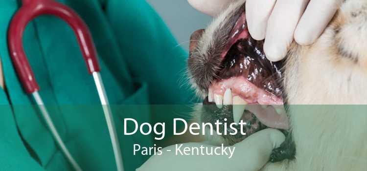 Dog Dentist Paris - Kentucky