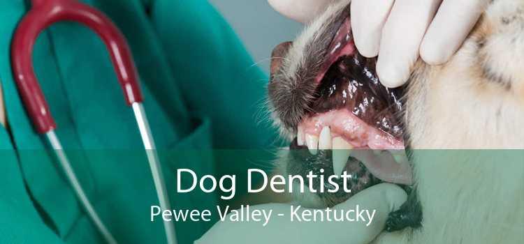Dog Dentist Pewee Valley - Kentucky
