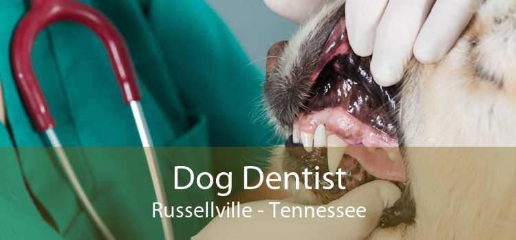 Dog Dentist Russellville - Tennessee