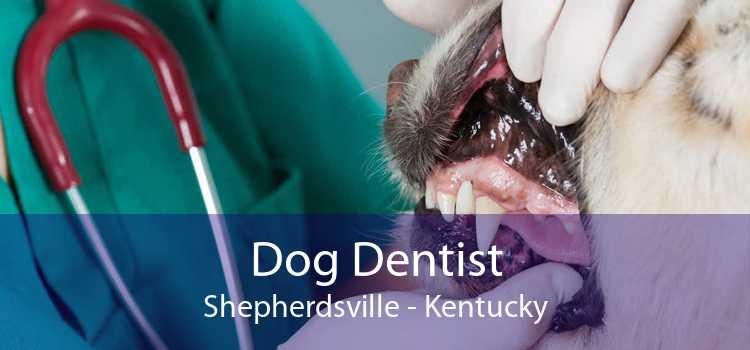 Dog Dentist Shepherdsville - Kentucky