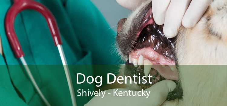 Dog Dentist Shively - Kentucky