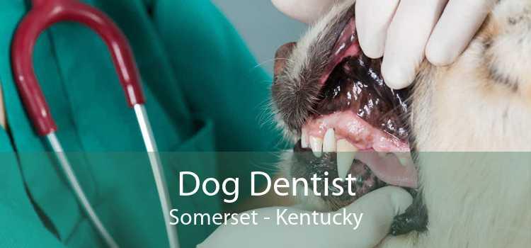 Dog Dentist Somerset - Kentucky