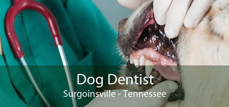 Dog Dentist Surgoinsville - Tennessee