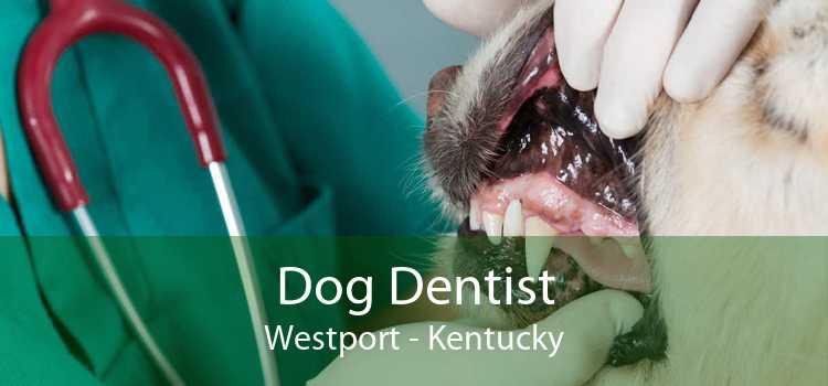 Dog Dentist Westport - Kentucky