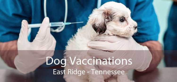 Dog Vaccinations East Ridge - Tennessee