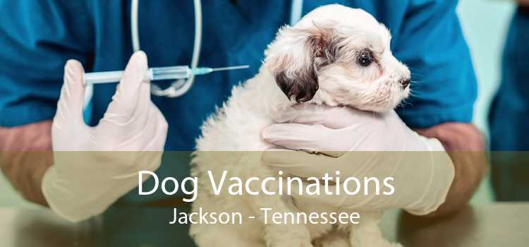 Dog Vaccinations Jackson - Tennessee