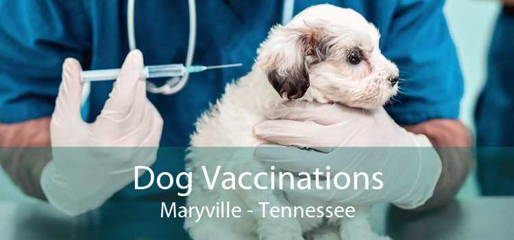 Dog Vaccinations Maryville - Tennessee
