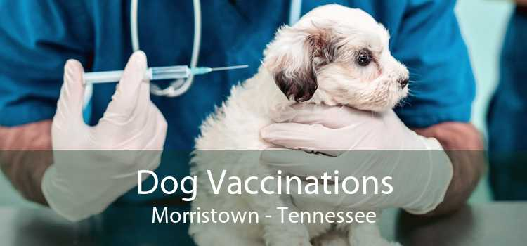 Dog Vaccinations Morristown - Tennessee