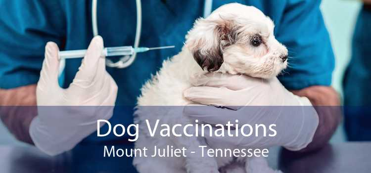 Dog Vaccinations Mount Juliet - Tennessee