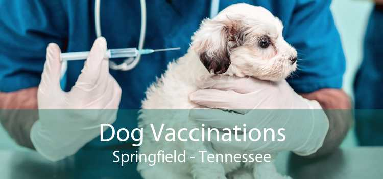 Dog Vaccinations Springfield - Tennessee
