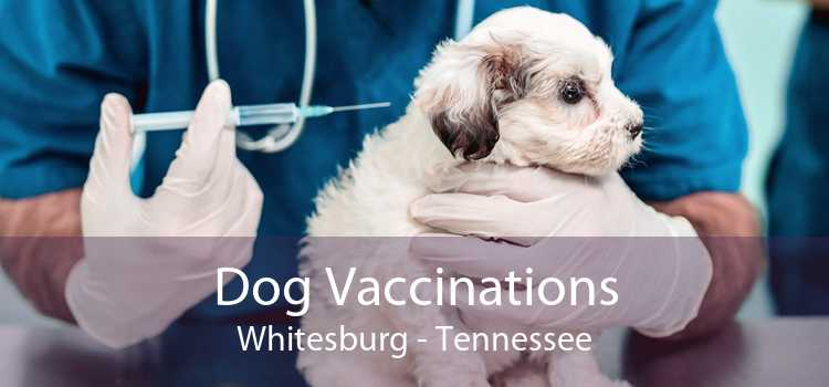 Dog Vaccinations Whitesburg - Tennessee