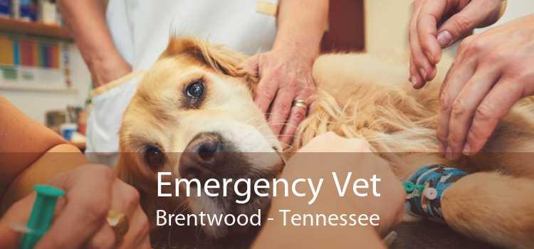 Emergency Vet Brentwood - Tennessee