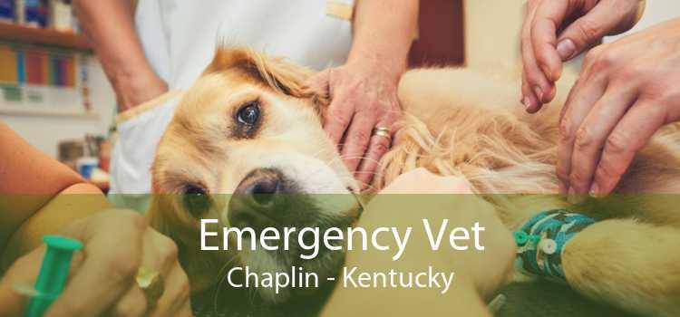 Emergency Vet Chaplin - Kentucky