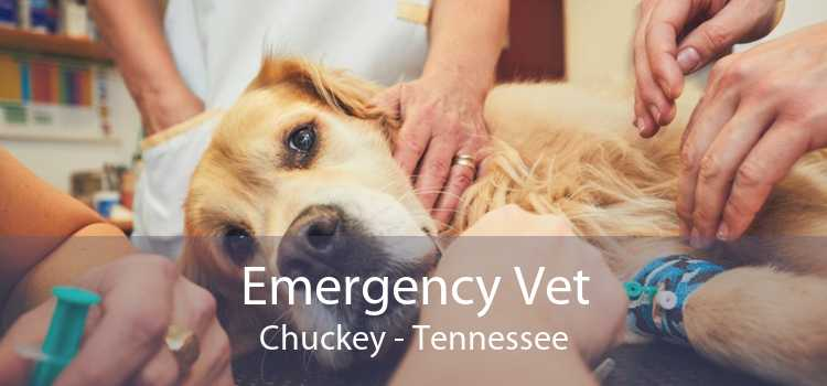 Emergency Vet Chuckey - Tennessee