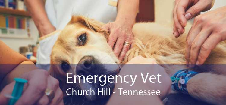 Emergency Vet Church Hill - Tennessee